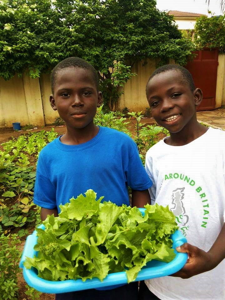 Two boys holding lettuce in a tray