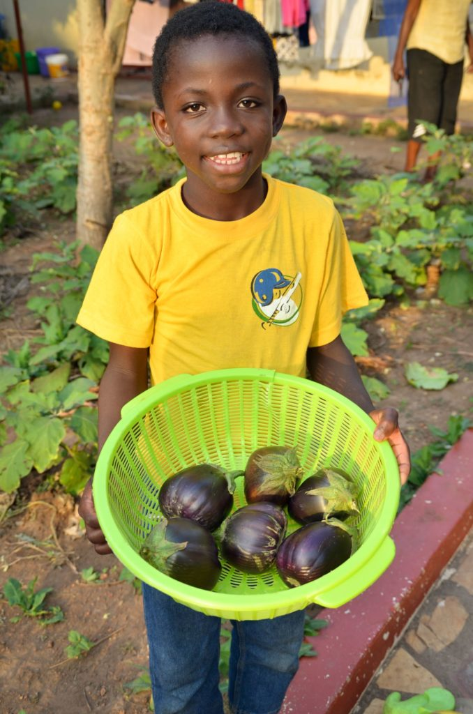Boy in Yellow Shirt holding Eggplants in A Basket