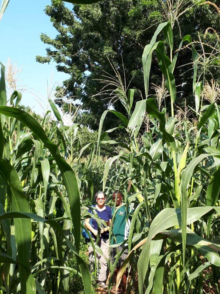 TWO WOMEN IN MAIZE FARM